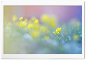 Blurred Flowers Image HD Wide Wallpaper for Widescreen