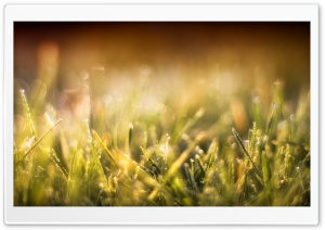 Blurred Grass HD Wide Wallpaper for Widescreen
