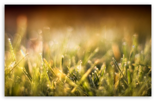 Blurred Grass HD wallpaper for Wide 16:10 5:3 Widescreen WHXGA WQXGA WUXGA WXGA WGA ; HD 16:9 High Definition WQHD QWXGA 1080p 900p 720p QHD nHD ; Standard 4:3 5:4 3:2 Fullscreen UXGA XGA SVGA QSXGA SXGA DVGA HVGA HQVGA devices ( Apple PowerBook G4 iPhone 4 3G 3GS iPod Touch ) ; Smartphone 5:3 WGA ; Tablet 1:1 ; iPad 1/2/Mini ; Mobile 4:3 5:3 3:2 16:9 5:4 - UXGA XGA SVGA WGA DVGA HVGA HQVGA devices ( Apple PowerBook G4 iPhone 4 3G 3GS iPod Touch ) WQHD QWXGA 1080p 900p 720p QHD nHD QSXGA SXGA ; Dual 16:10 5:3 4:3 5:4 WHXGA WQXGA WUXGA WXGA WGA UXGA XGA SVGA QSXGA SXGA ;