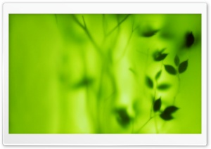 Blurred Green Leaves HD Wide Wallpaper for Widescreen