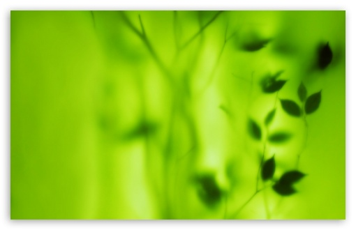 Blurred Green Leaves UltraHD Wallpaper for Wide 16:10 5:3 Widescreen WHXGA WQXGA WUXGA WXGA WGA ; 8K UHD TV 16:9 Ultra High Definition 2160p 1440p 1080p 900p 720p ; Standard 4:3 5:4 3:2 Fullscreen UXGA XGA SVGA QSXGA SXGA DVGA HVGA HQVGA ( Apple PowerBook G4 iPhone 4 3G 3GS iPod Touch ) ; Tablet 1:1 ; iPad 1/2/Mini ; Mobile 4:3 5:3 3:2 16:9 5:4 - UXGA XGA SVGA WGA DVGA HVGA HQVGA ( Apple PowerBook G4 iPhone 4 3G 3GS iPod Touch ) 2160p 1440p 1080p 900p 720p QSXGA SXGA ;