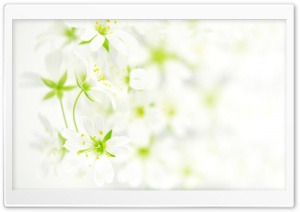 Blurred White Flowers HD Wide Wallpaper for Widescreen