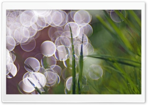 Bokeh HD Wide Wallpaper for Widescreen
