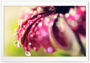 Bokeh Drops &amp; Flower HD Wide Wallpaper for Widescreen