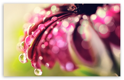 Bokeh Drops & Flower HD wallpaper for Wide 16:10 5:3 Widescreen WHXGA WQXGA WUXGA WXGA WGA ; HD 16:9 High Definition WQHD QWXGA 1080p 900p 720p QHD nHD ; Standard 4:3 5:4 3:2 Fullscreen UXGA XGA SVGA QSXGA SXGA DVGA HVGA HQVGA devices ( Apple PowerBook G4 iPhone 4 3G 3GS iPod Touch ) ; Tablet 1:1 ; iPad 1/2/Mini ; Mobile 4:3 5:3 3:2 16:9 5:4 - UXGA XGA SVGA WGA DVGA HVGA HQVGA devices ( Apple PowerBook G4 iPhone 4 3G 3GS iPod Touch ) WQHD QWXGA 1080p 900p 720p QHD nHD QSXGA SXGA ;