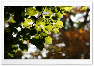 Bokeh Leaves HD Wide Wallpaper for Widescreen