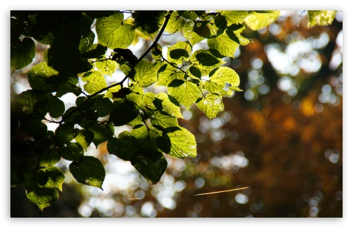 Bokeh Leaves HD wallpaper for Wide 16:10 5:3 Widescreen WHXGA WQXGA WUXGA WXGA WGA ; HD 16:9 High Definition WQHD QWXGA 1080p 900p 720p QHD nHD ; UHD 16:9 WQHD QWXGA 1080p 900p 720p QHD nHD ; Standard 4:3 5:4 3:2 Fullscreen UXGA XGA SVGA QSXGA SXGA DVGA HVGA HQVGA devices ( Apple PowerBook G4 iPhone 4 3G 3GS iPod Touch ) ; Tablet 1:1 ; iPad 1/2/Mini ; Mobile 4:3 5:3 3:2 16:9 5:4 - UXGA XGA SVGA WGA DVGA HVGA HQVGA devices ( Apple PowerBook G4 iPhone 4 3G 3GS iPod Touch ) WQHD QWXGA 1080p 900p 720p QHD nHD QSXGA SXGA ; Dual 16:10 5:3 16:9 4:3 5:4 WHXGA WQXGA WUXGA WXGA WGA WQHD QWXGA 1080p 900p 720p QHD nHD UXGA XGA SVGA QSXGA SXGA ;