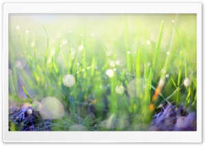 Bokeh, Morning Light, Green Grass Ultra HD Wallpaper for 4K UHD Widescreen desktop, tablet & smartphone