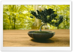 Bonsai HD Wide Wallpaper for Widescreen