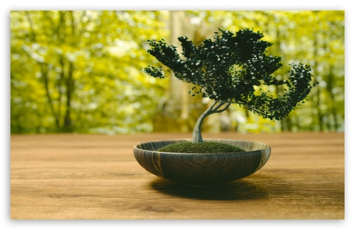 Bonsai ❤ 4K UHD Wallpaper for Wide 16:10 5:3 Widescreen WHXGA WQXGA WUXGA WXGA WGA ; UltraWide 21:9 24:10 ; 4K UHD 16:9 Ultra High Definition 2160p 1440p 1080p 900p 720p ; UHD 16:9 2160p 1440p 1080p 900p 720p ; Standard 4:3 5:4 3:2 Fullscreen UXGA XGA SVGA QSXGA SXGA DVGA HVGA HQVGA ( Apple PowerBook G4 iPhone 4 3G 3GS iPod Touch ) ; Tablet 1:1 ; iPad 1/2/Mini ; Mobile 4:3 5:3 3:2 16:9 5:4 - UXGA XGA SVGA WGA DVGA HVGA HQVGA ( Apple PowerBook G4 iPhone 4 3G 3GS iPod Touch ) 2160p 1440p 1080p 900p 720p QSXGA SXGA ; Dual 5:4 QSXGA SXGA ;