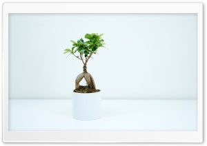Bonsai Plant Indoor HD Wide Wallpaper for 4K UHD Widescreen desktop & smartphone
