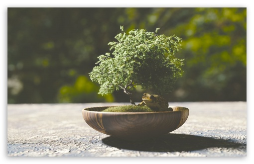 Bonsai Tree HD wallpaper for Wide 16:10 5:3 Widescreen WHXGA WQXGA WUXGA WXGA WGA ; HD 16:9 High Definition WQHD QWXGA 1080p 900p 720p QHD nHD ; Standard 4:3 5:4 3:2 Fullscreen UXGA XGA SVGA QSXGA SXGA DVGA HVGA HQVGA devices ( Apple PowerBook G4 iPhone 4 3G 3GS iPod Touch ) ; Tablet 1:1 ; iPad 1/2/Mini ; Mobile 4:3 5:3 3:2 16:9 5:4 - UXGA XGA SVGA WGA DVGA HVGA HQVGA devices ( Apple PowerBook G4 iPhone 4 3G 3GS iPod Touch ) WQHD QWXGA 1080p 900p 720p QHD nHD QSXGA SXGA ; Dual 16:10 5:3 16:9 4:3 5:4 WHXGA WQXGA WUXGA WXGA WGA WQHD QWXGA 1080p 900p 720p QHD nHD UXGA XGA SVGA QSXGA SXGA ;