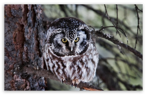 Boreal Owl ❤ 4K UHD Wallpaper for Wide 16:10 5:3 Widescreen WHXGA WQXGA WUXGA WXGA WGA ; 4K UHD 16:9 Ultra High Definition 2160p 1440p 1080p 900p 720p ; UHD 16:9 2160p 1440p 1080p 900p 720p ; Standard 4:3 5:4 3:2 Fullscreen UXGA XGA SVGA QSXGA SXGA DVGA HVGA HQVGA ( Apple PowerBook G4 iPhone 4 3G 3GS iPod Touch ) ; Smartphone 5:3 WGA ; Tablet 1:1 ; iPad 1/2/Mini ; Mobile 4:3 5:3 3:2 16:9 5:4 - UXGA XGA SVGA WGA DVGA HVGA HQVGA ( Apple PowerBook G4 iPhone 4 3G 3GS iPod Touch ) 2160p 1440p 1080p 900p 720p QSXGA SXGA ;