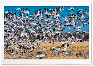 Bosque del Apache National Wildlife Refuge HD Wide Wallpaper for Widescreen