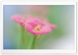 Botanical Garden Pink Flower Macro HD Wide Wallpaper for Widescreen