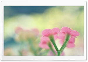 Botanical Garden Pink Flowers HD Wide Wallpaper for Widescreen