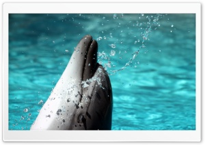 Bottlenose Dolphin HD Wide Wallpaper for Widescreen