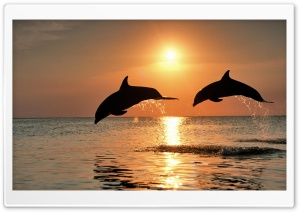 Bottlenose Dolphin Jumping At Sunset Caribbean Honduras HD Wide Wallpaper for 4K UHD Widescreen desktop & smartphone