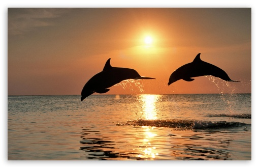 Bottlenose Dolphin Jumping At Sunset Caribbean Honduras HD wallpaper for Wide 16:10 5:3 Widescreen WHXGA WQXGA WUXGA WXGA WGA ; HD 16:9 High Definition WQHD QWXGA 1080p 900p 720p QHD nHD ; Standard 4:3 5:4 Fullscreen UXGA XGA SVGA QSXGA SXGA ; MS 3:2 DVGA HVGA HQVGA devices ( Apple PowerBook G4 iPhone 4 3G 3GS iPod Touch ) ; Mobile VGA WVGA iPhone iPad PSP Phone - VGA QVGA Smartphone ( PocketPC GPS iPod Zune BlackBerry HTC Samsung LG Nokia Eten Asus ) WVGA WQVGA Smartphone ( HTC Samsung Sony Ericsson LG Vertu MIO ) HVGA Smartphone ( Apple iPhone iPod BlackBerry HTC Samsung Nokia ) Sony PSP Zune HD Zen ; Tablet 1&2 Android ;