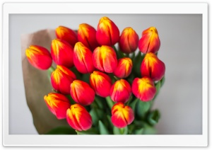 Bouquet Of Red Tulips Wrapped In Butcher Paper HD Wide Wallpaper for 4K UHD Widescreen desktop & smartphone