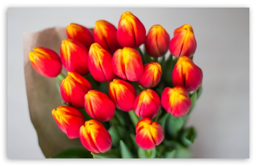 Bouquet Of Red Tulips Wrapped In Butcher Paper ❤ 4K UHD Wallpaper for Wide 16:10 5:3 Widescreen WHXGA WQXGA WUXGA WXGA WGA ; 4K UHD 16:9 Ultra High Definition 2160p 1440p 1080p 900p 720p ; UHD 16:9 2160p 1440p 1080p 900p 720p ; Standard 4:3 5:4 3:2 Fullscreen UXGA XGA SVGA QSXGA SXGA DVGA HVGA HQVGA ( Apple PowerBook G4 iPhone 4 3G 3GS iPod Touch ) ; Smartphone 5:3 WGA ; Tablet 1:1 ; iPad 1/2/Mini ; Mobile 4:3 5:3 3:2 16:9 5:4 - UXGA XGA SVGA WGA DVGA HVGA HQVGA ( Apple PowerBook G4 iPhone 4 3G 3GS iPod Touch ) 2160p 1440p 1080p 900p 720p QSXGA SXGA ;