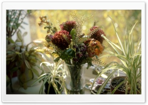 Bouquet Several Days Later HD Wide Wallpaper for Widescreen