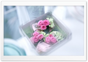 Box With Roses HD Wide Wallpaper for Widescreen