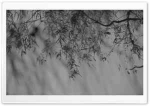 Branch Black And White HD Wide Wallpaper for Widescreen