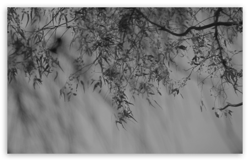 Branch Black And White HD wallpaper for Wide 16:10 5:3 Widescreen WHXGA WQXGA WUXGA WXGA WGA ; HD 16:9 High Definition WQHD QWXGA 1080p 900p 720p QHD nHD ; UHD 16:9 WQHD QWXGA 1080p 900p 720p QHD nHD ; Standard 4:3 5:4 3:2 Fullscreen UXGA XGA SVGA QSXGA SXGA DVGA HVGA HQVGA devices ( Apple PowerBook G4 iPhone 4 3G 3GS iPod Touch ) ; Tablet 1:1 ; iPad 1/2/Mini ; Mobile 4:3 5:3 3:2 16:9 5:4 - UXGA XGA SVGA WGA DVGA HVGA HQVGA devices ( Apple PowerBook G4 iPhone 4 3G 3GS iPod Touch ) WQHD QWXGA 1080p 900p 720p QHD nHD QSXGA SXGA ; Dual 16:10 5:3 16:9 4:3 5:4 WHXGA WQXGA WUXGA WXGA WGA WQHD QWXGA 1080p 900p 720p QHD nHD UXGA XGA SVGA QSXGA SXGA ;