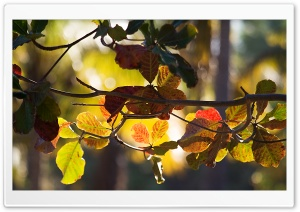 Branch Bokeh, Autumn HD Wide Wallpaper for Widescreen