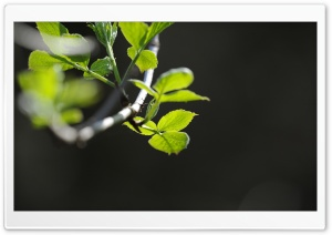 Branch Macro HD Wide Wallpaper for Widescreen