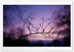Branch Silhouette At Sunset HD Wide Wallpaper for Widescreen