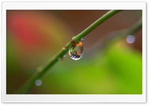 Branch With A Drop Of Rain HD Wide Wallpaper for Widescreen