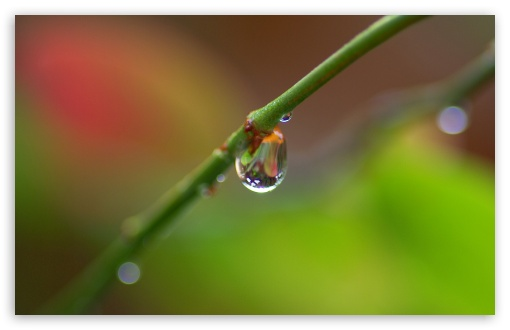 Branch With A Drop Of Rain HD wallpaper for Standard 4:3 Fullscreen UXGA XGA SVGA ; Wide 16:10 5:3 Widescreen WHXGA WQXGA WUXGA WXGA WGA ; HD 16:9 High Definition WQHD QWXGA 1080p 900p 720p QHD nHD ; Other 3:2 DVGA HVGA HQVGA devices ( Apple PowerBook G4 iPhone 4 3G 3GS iPod Touch ) ; Mobile VGA WVGA iPhone iPad PSP Phone - VGA QVGA Smartphone ( PocketPC GPS iPod Zune BlackBerry HTC Samsung LG Nokia Eten Asus ) WVGA WQVGA Smartphone ( HTC Samsung Sony Ericsson LG Vertu MIO ) HVGA Smartphone ( Apple iPhone iPod BlackBerry HTC Samsung Nokia ) Sony PSP Zune HD Zen ; Tablet 2 Android 3 DVGA HVGA HQVGA devices ( Apple PowerBook G4 iPhone 4 3G 3GS iPod Touch ) ; Dual 4:3 5:4 16:10 5:3 16:9 UXGA XGA SVGA QSXGA SXGA WHXGA WQXGA WUXGA WXGA WGA WQHD QWXGA 1080p 900p 720p QHD nHD ;