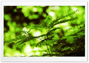 Branch With Green Leaves 14 HD Wide Wallpaper for Widescreen