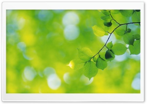 Branch With Green Leaves 16 HD Wide Wallpaper for 4K UHD Widescreen desktop & smartphone