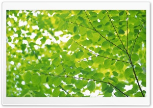 Branch With Green Leaves 18 HD Wide Wallpaper for Widescreen
