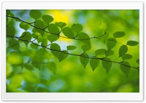 Branch With Green Leaves 19 HD Wide Wallpaper for Widescreen