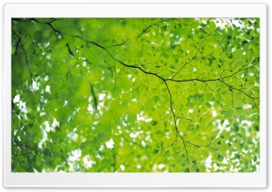 Branch With Green Leaves 22 HD Wide Wallpaper for Widescreen