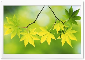 Branch With Green Leaves 23 HD Wide Wallpaper for 4K UHD Widescreen desktop & smartphone