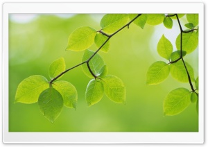 Branch With Green Leaves 26 HD Wide Wallpaper for Widescreen
