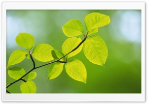 Branch With Green Leaves 27 HD Wide Wallpaper for Widescreen