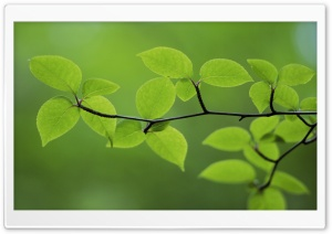 Branch With Green Leaves 30 HD Wide Wallpaper for Widescreen