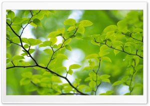 Branch With Green Leaves 32 HD Wide Wallpaper for 4K UHD Widescreen desktop & smartphone