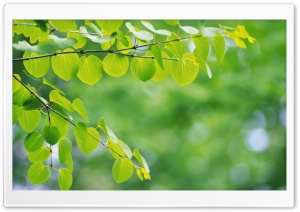 Branch With Green Leaves 34 HD Wide Wallpaper for Widescreen