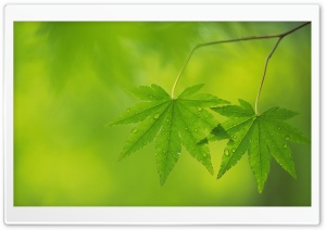 Branch With Green Leaves 36 Ultra HD Wallpaper for 4K UHD Widescreen desktop, tablet & smartphone