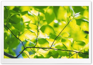Branch With Green Leaves 4 HD Wide Wallpaper for Widescreen
