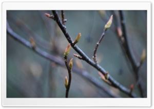 Branches Ultra HD Wallpaper for 4K UHD Widescreen desktop, tablet & smartphone