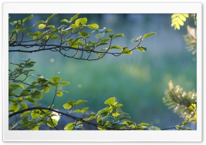 Branches Ultra HD Wallpaper for 4K UHD Widescreen desktop, tablet & smartphone