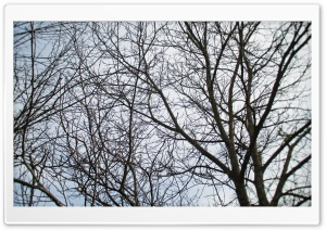 Branches HD Wide Wallpaper for Widescreen